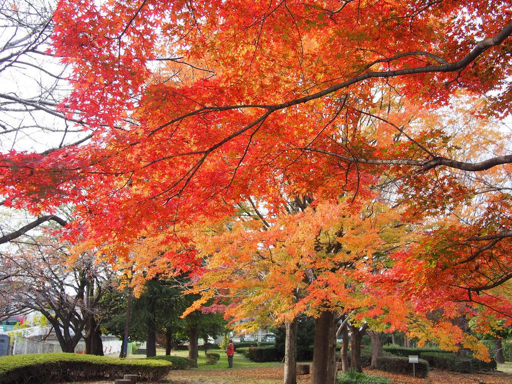 Fall Foliage at Senkawa Park by nakashi, on Flickr