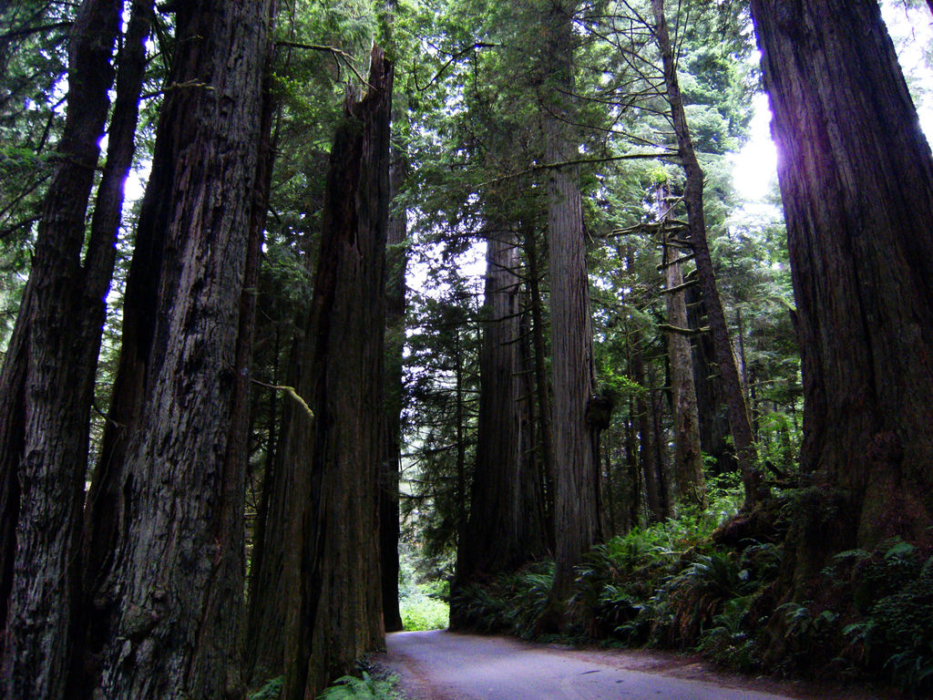 Redwood National Park by Theo Crazzolara, on Flickr