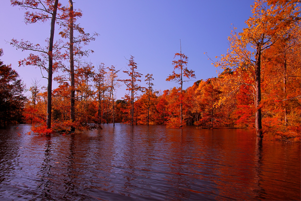 Ouachita River Fall Backwater by finchlake2000, on Flickr
