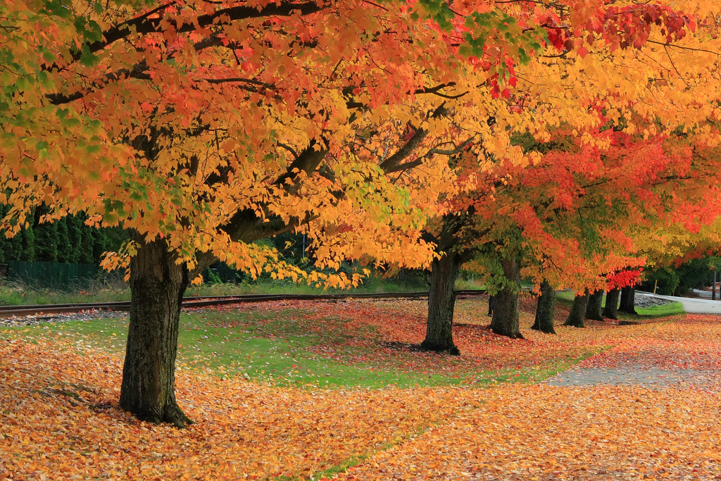 Fall in Issaquah by Thales, on Flickr
