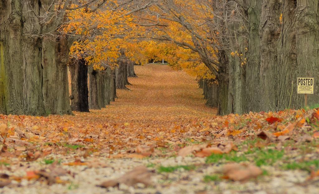 Leaves ... fall in Millstone NJ by joiseyshowaa, on Flickr