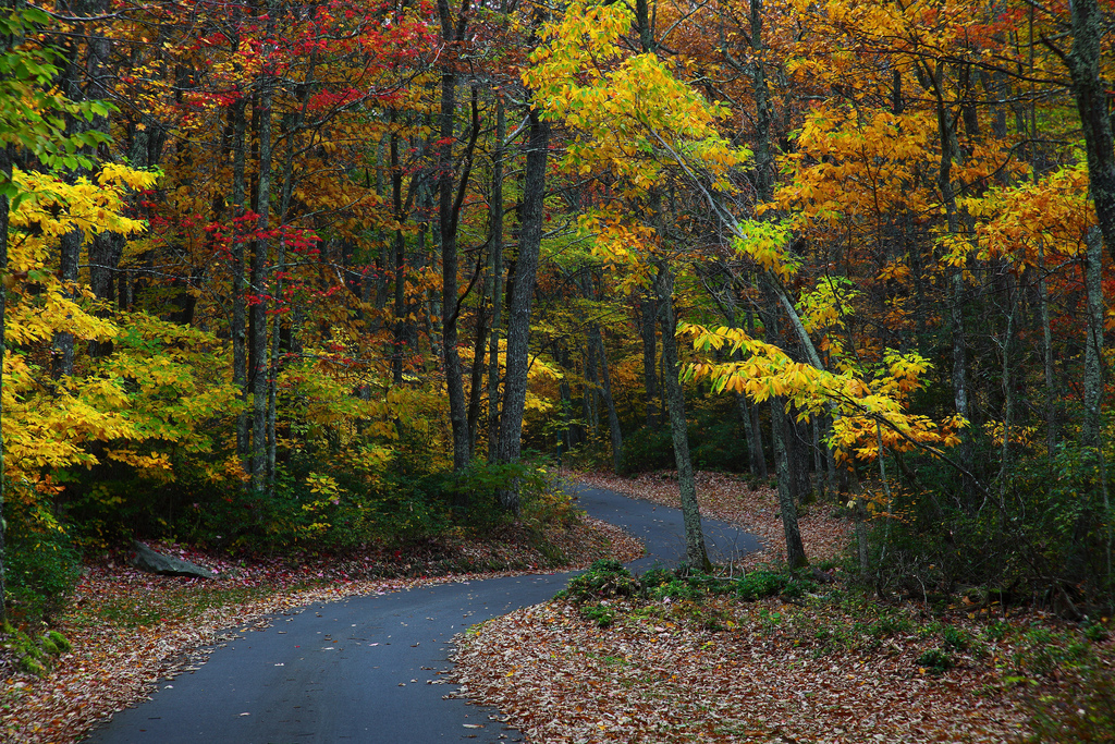 Autumn Winding Road by ForestWander.com, on Flickr