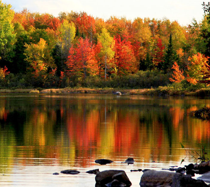Brilliant Autumn Foliage in the North Wo by Dana Moos, on Flickr