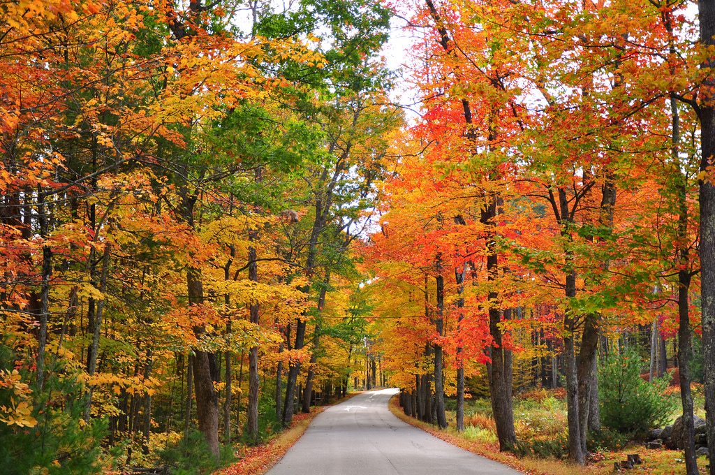 Fall Foliage by kimberlykv, on Flickr