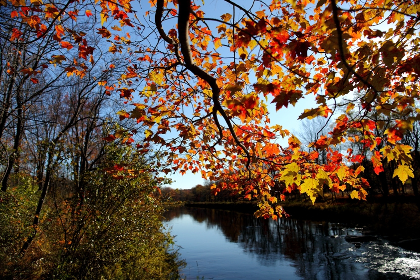 Fall tree branch leaves along river by ForestWander.com, on Flickr