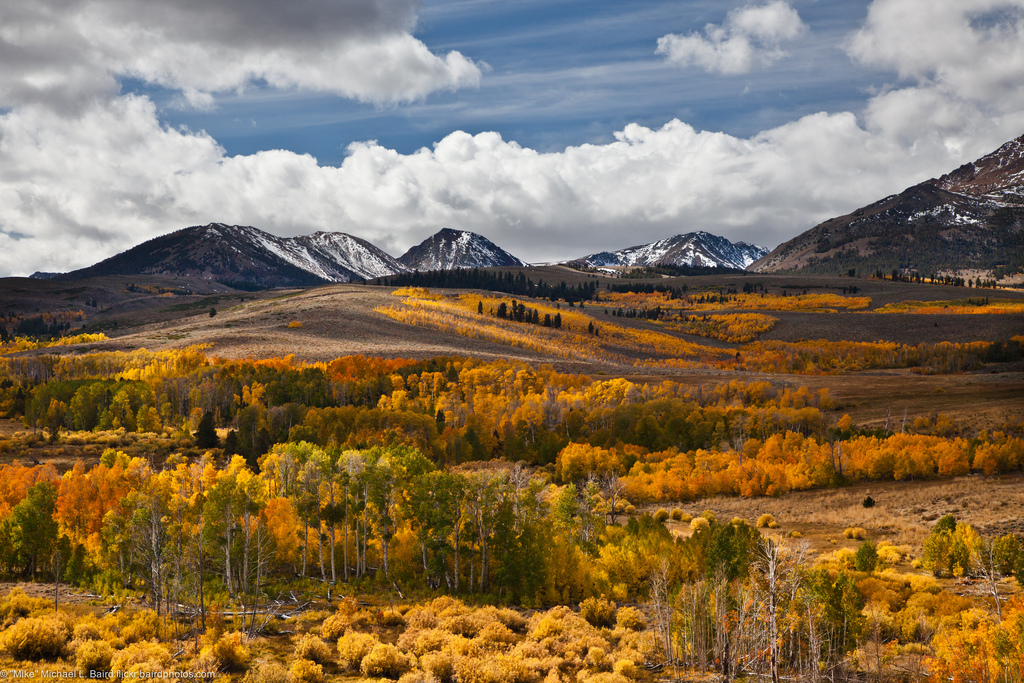 Aspen Tree Fall Yellow Color off Conway by mikebaird, on Flickr