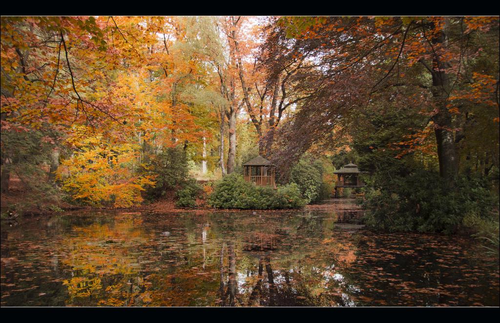 Autumn in Maharishi's Garden by Bert Kaufmann, on Flickr