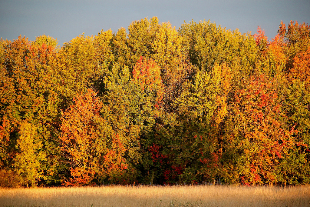 Fall foliage at Missisquoi National Wild by U. S. Fish and Wildlife Service - Northeast Region, on Flickr